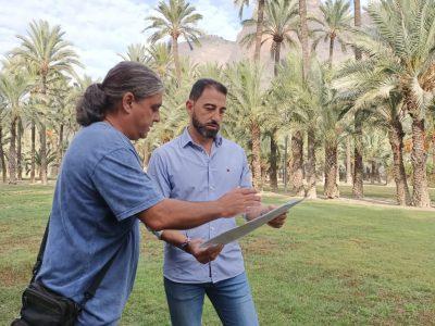 Orihuela organiza este jueves una jornada sobre su palmeral
